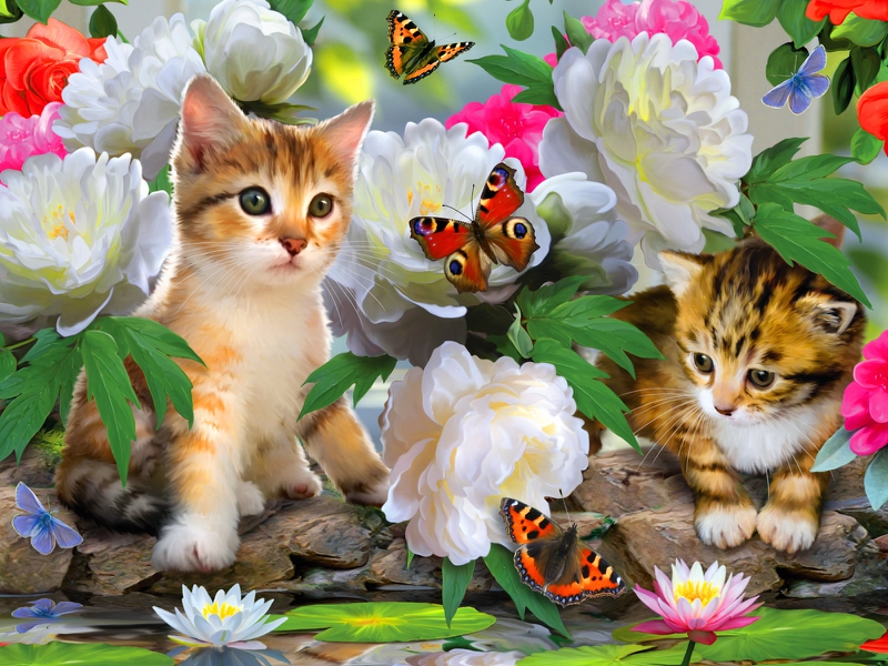butterflies cats Fun among flowers Abstract Other HD Desktop 800x600