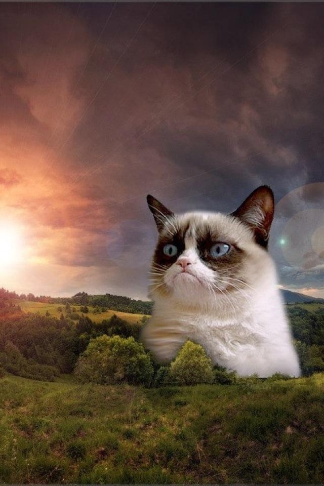 Grumpy Cat Iphone Wallpaper My grumpy cat wallpaper 640x960