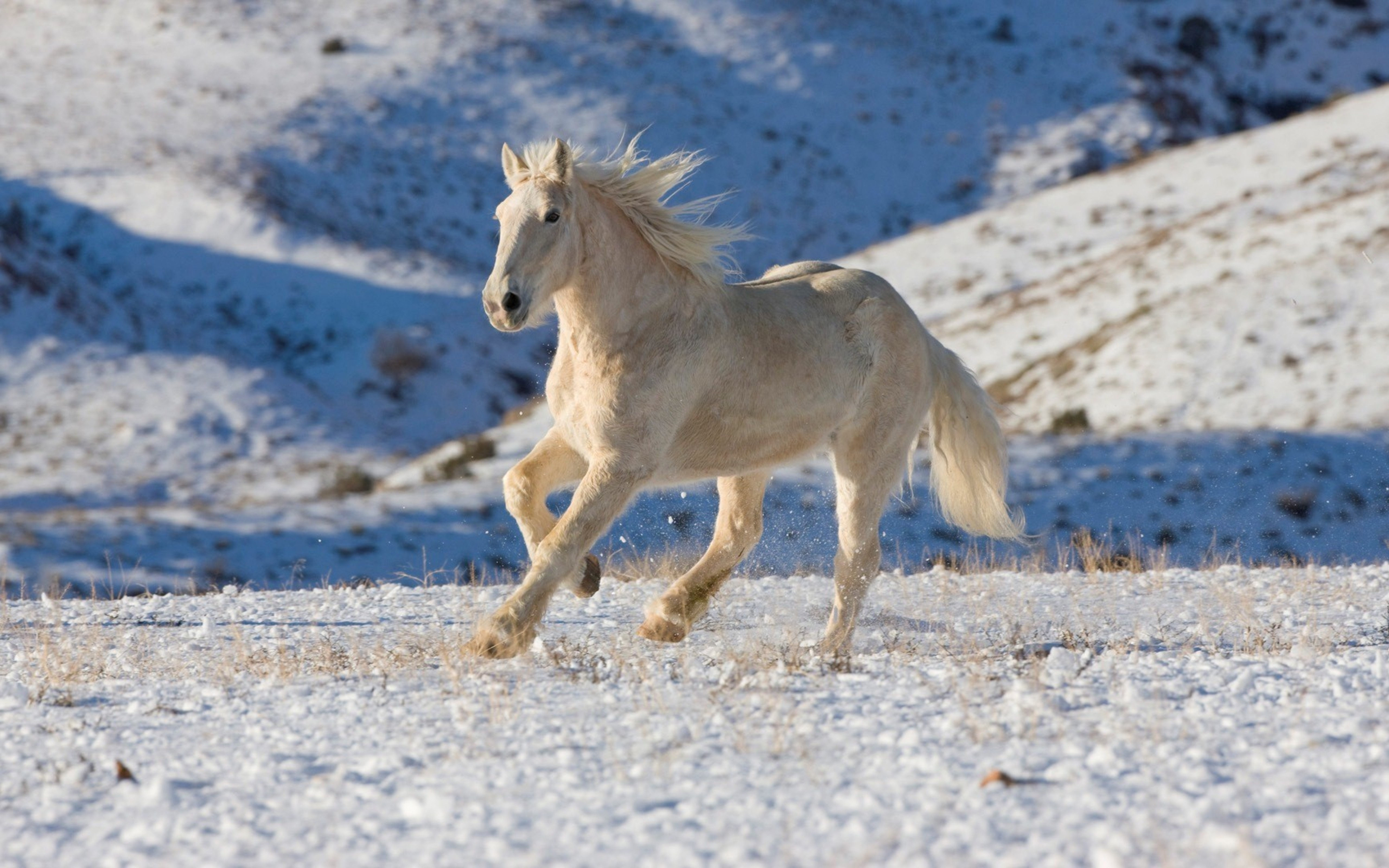 Free Download Horse In The Nature White Wallpaper 5120x3200 For