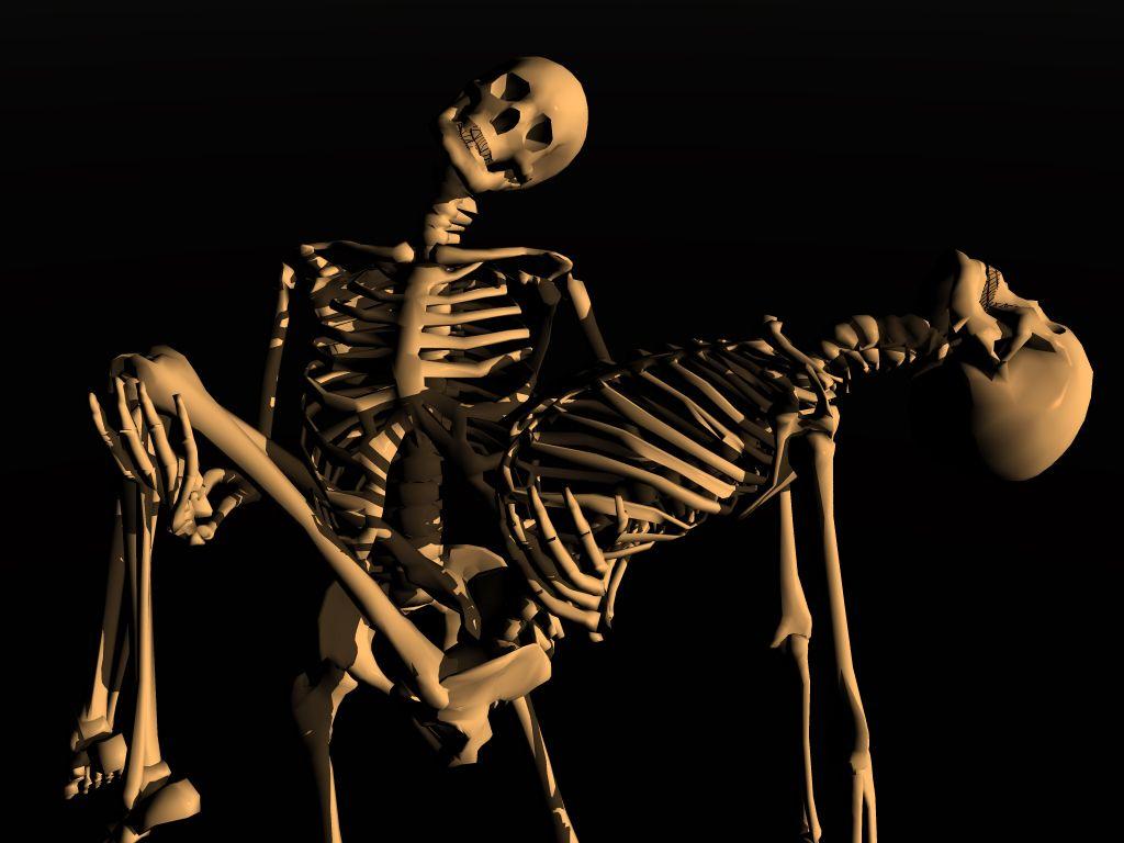 Download 3DD Skeletons Wallpaper 1024x768 Wallpoper 154269 1024x768