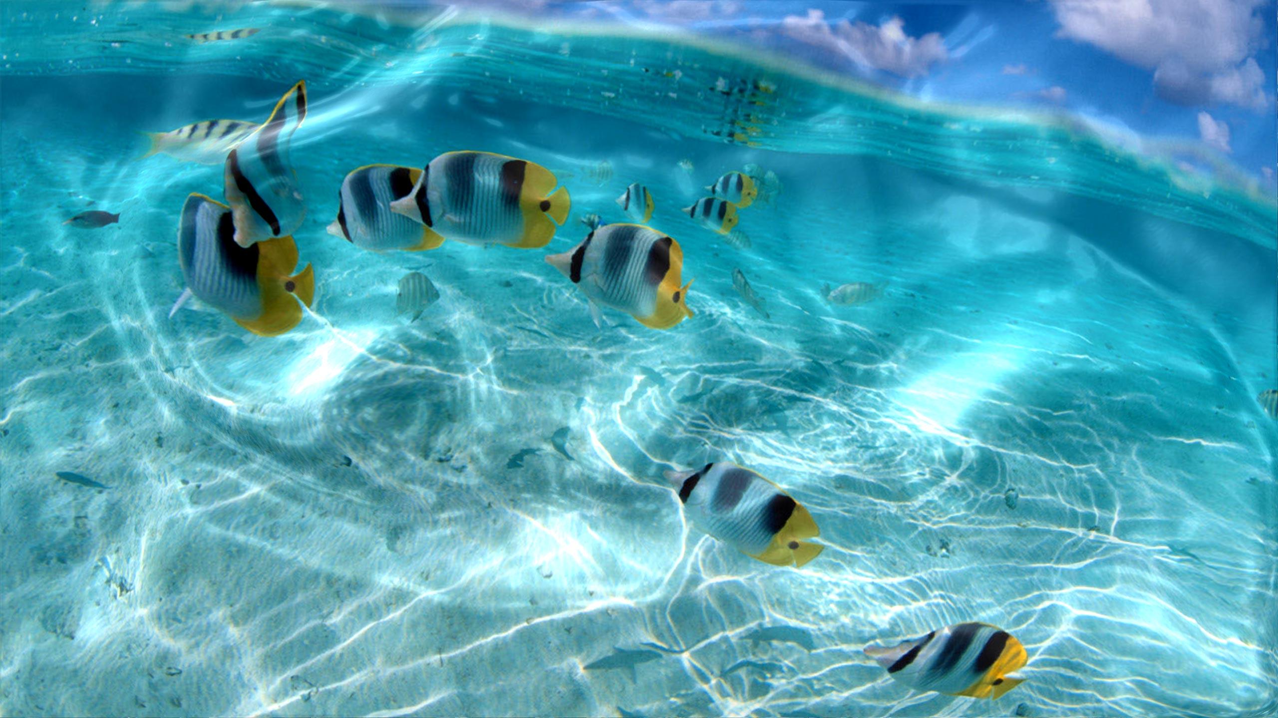 Watery Desktop Animated Wallpaperjpg 2560x1440