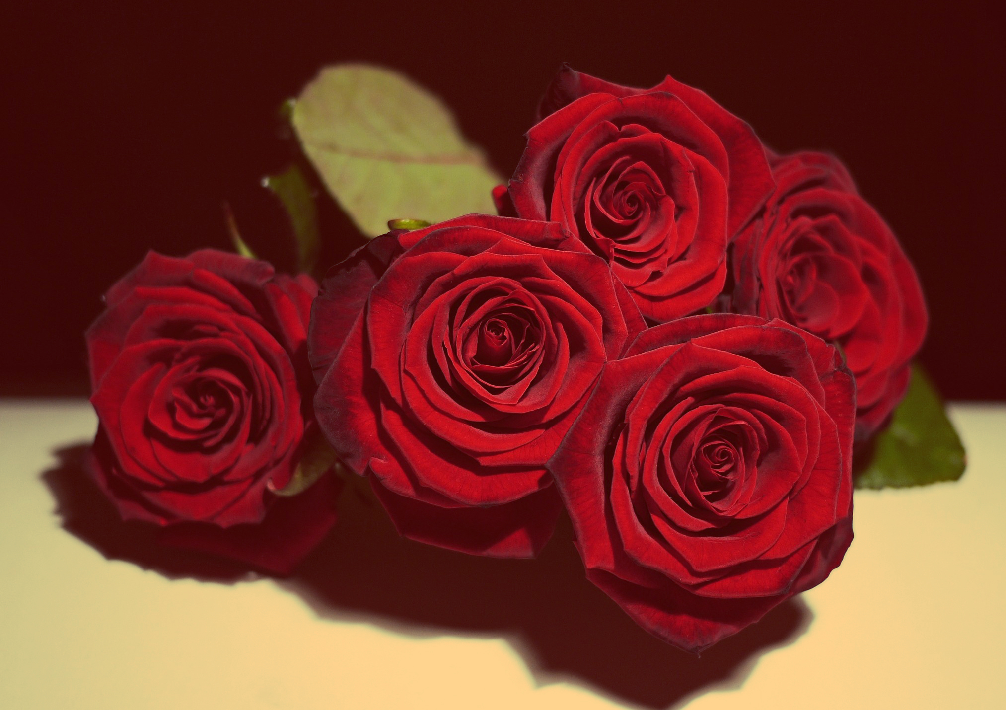 Red Rose Love Wallpaper