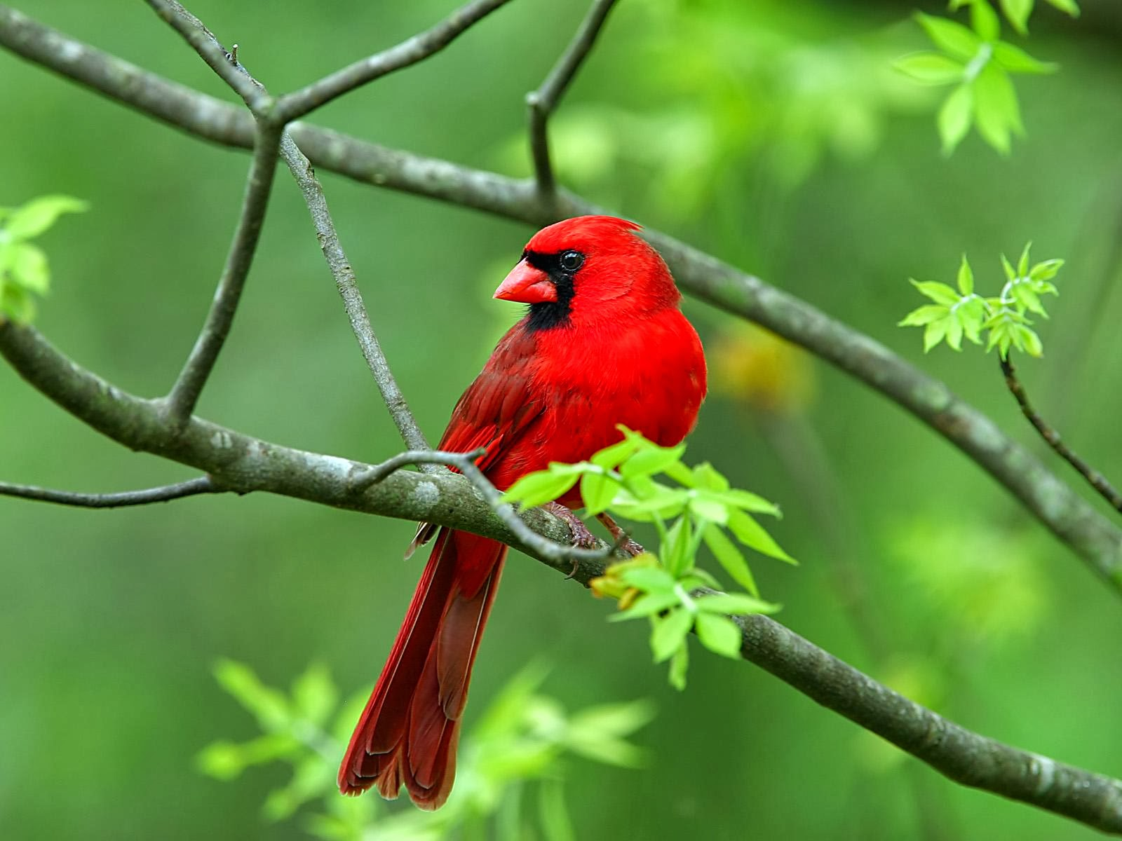 you the best Beautiful Birds Wallpapers Beautiful Birds Pictures 1600x1200