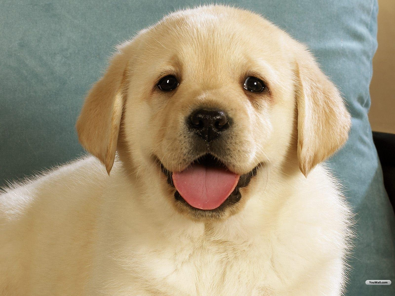Wallpapers of cute dogs wallpapersafari for Adorable wallpapers