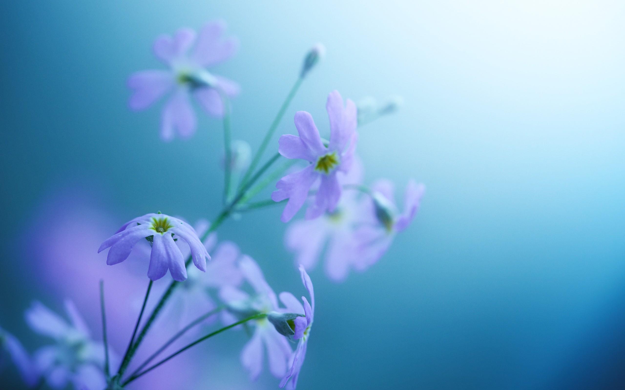 Natural Flowers Desktop Hd Wallpapers 8938 Wallpaper 2560x1600