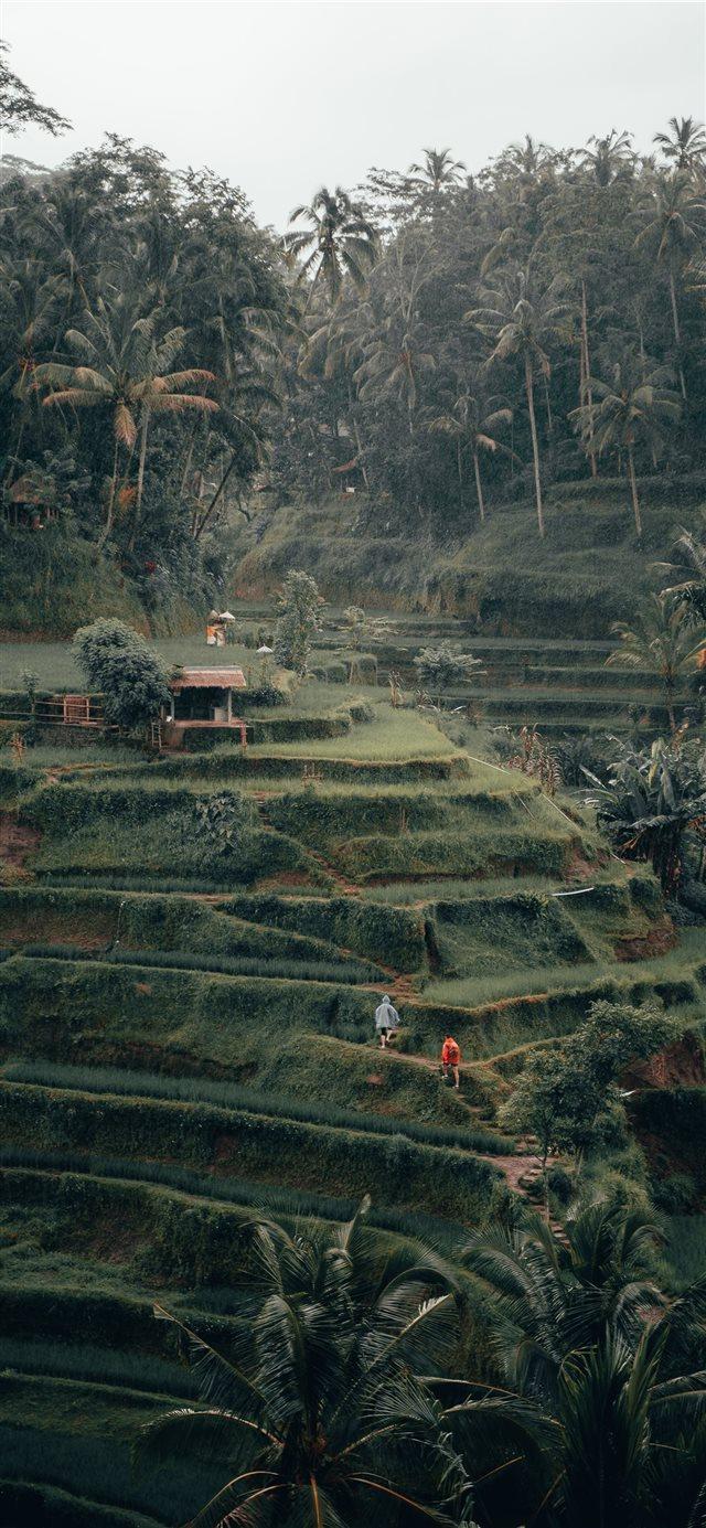 Tegalalang Rice Terrace Ubud Bali iPhone X Wallpapers Download 640x1385