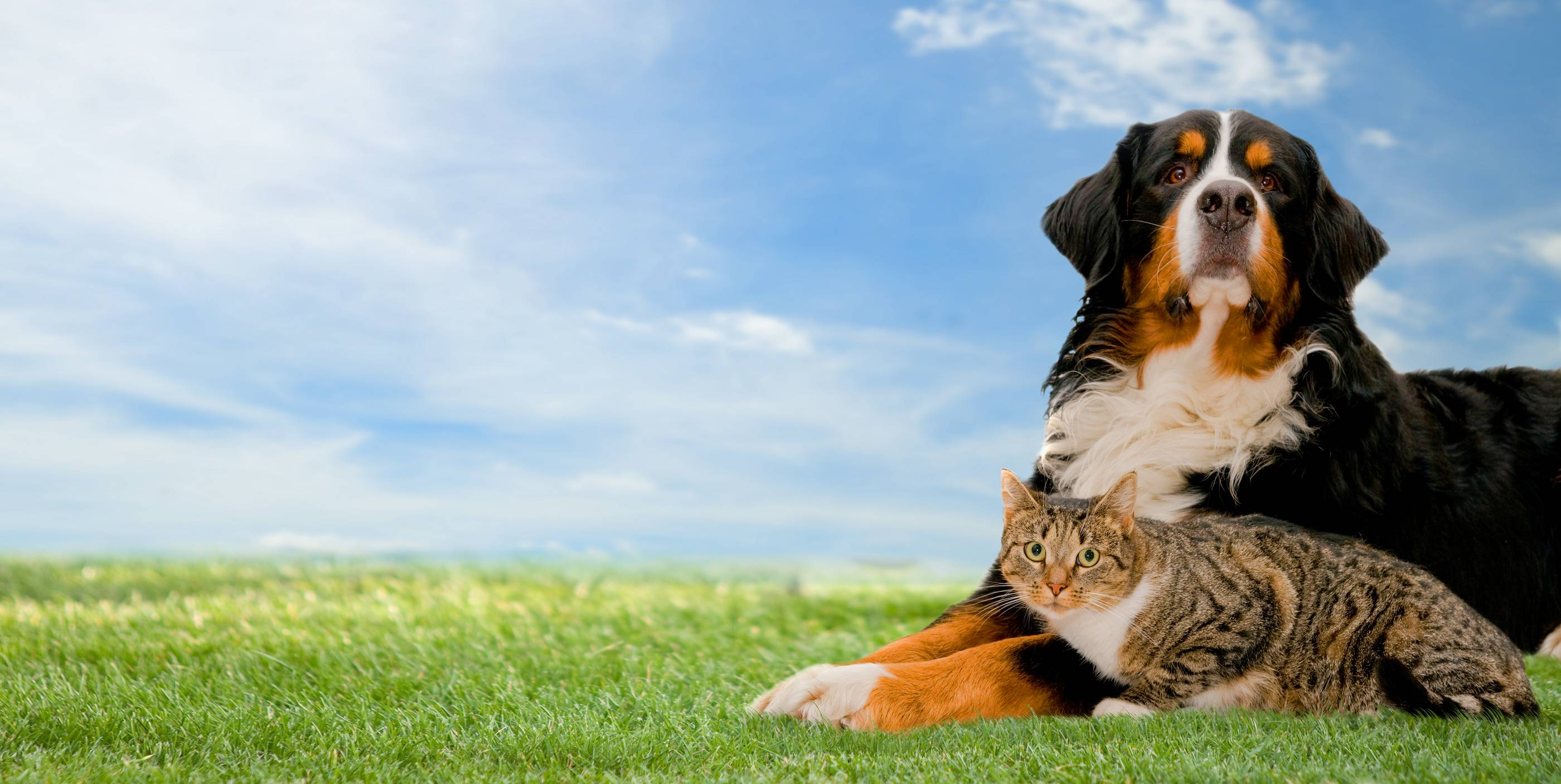 Cats And Dogs Wallpapers 2800x1408
