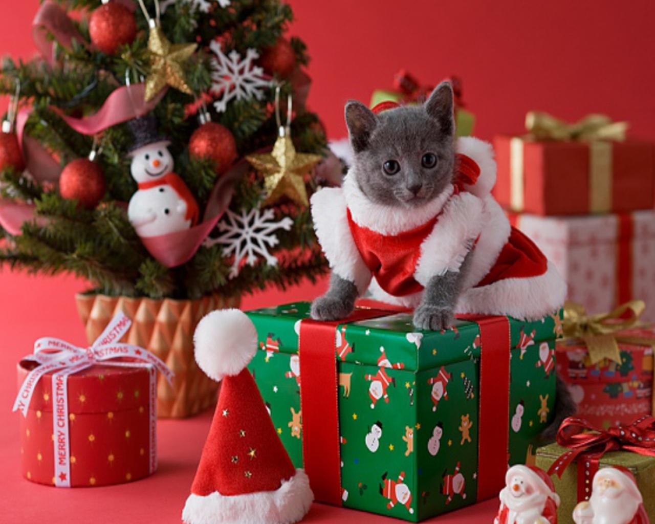 Christmas Desktop Wallpapers Christmas Kittens Wallpaper For 1280x1024
