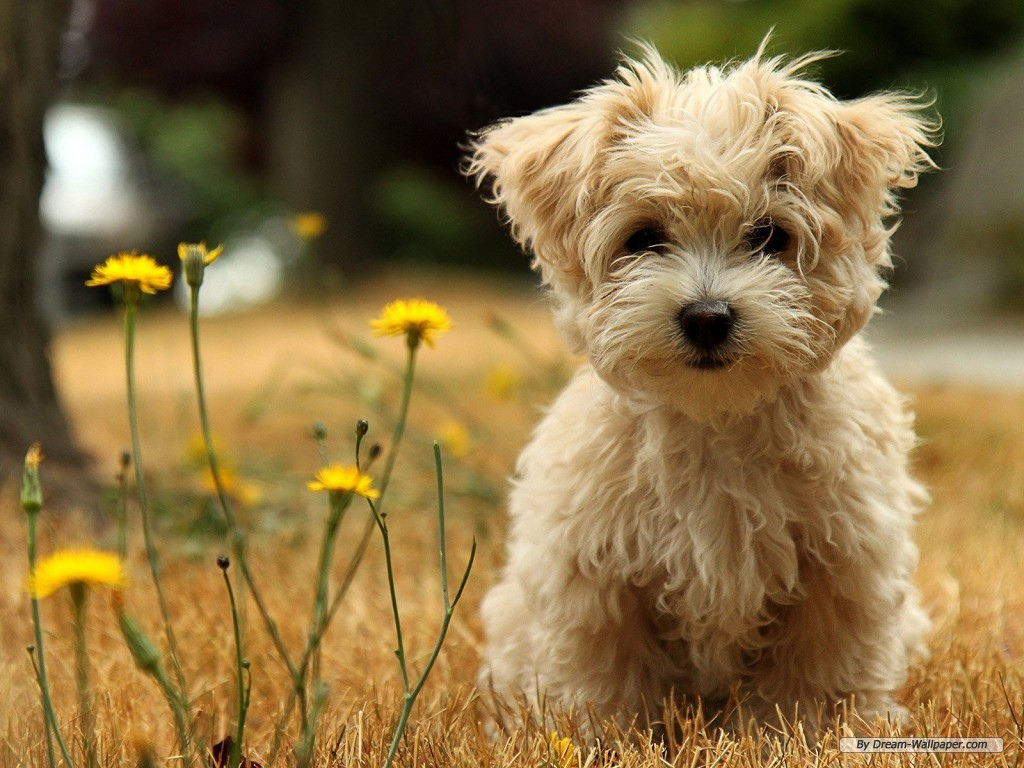 Animal wallpaper   Cute Dog 1 wallpaper   1024x768 wallpaper 1024x768