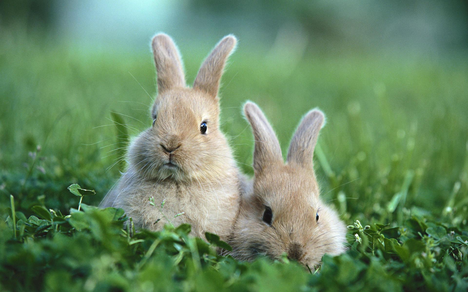 Cute Rabbit Wallpapers Rabbit Desktop Wallpapers 1080p 1920x1200