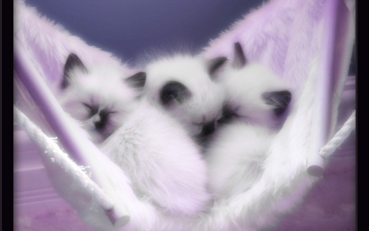Wallpaper Cute Photos Cute Kittens Wallpaper 1280x800