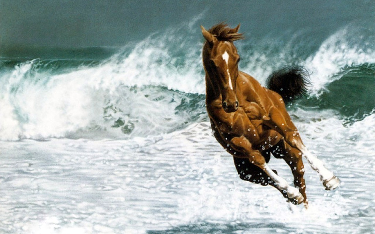 Horses images Beautiful Horse HD wallpaper and background photos 1280x800