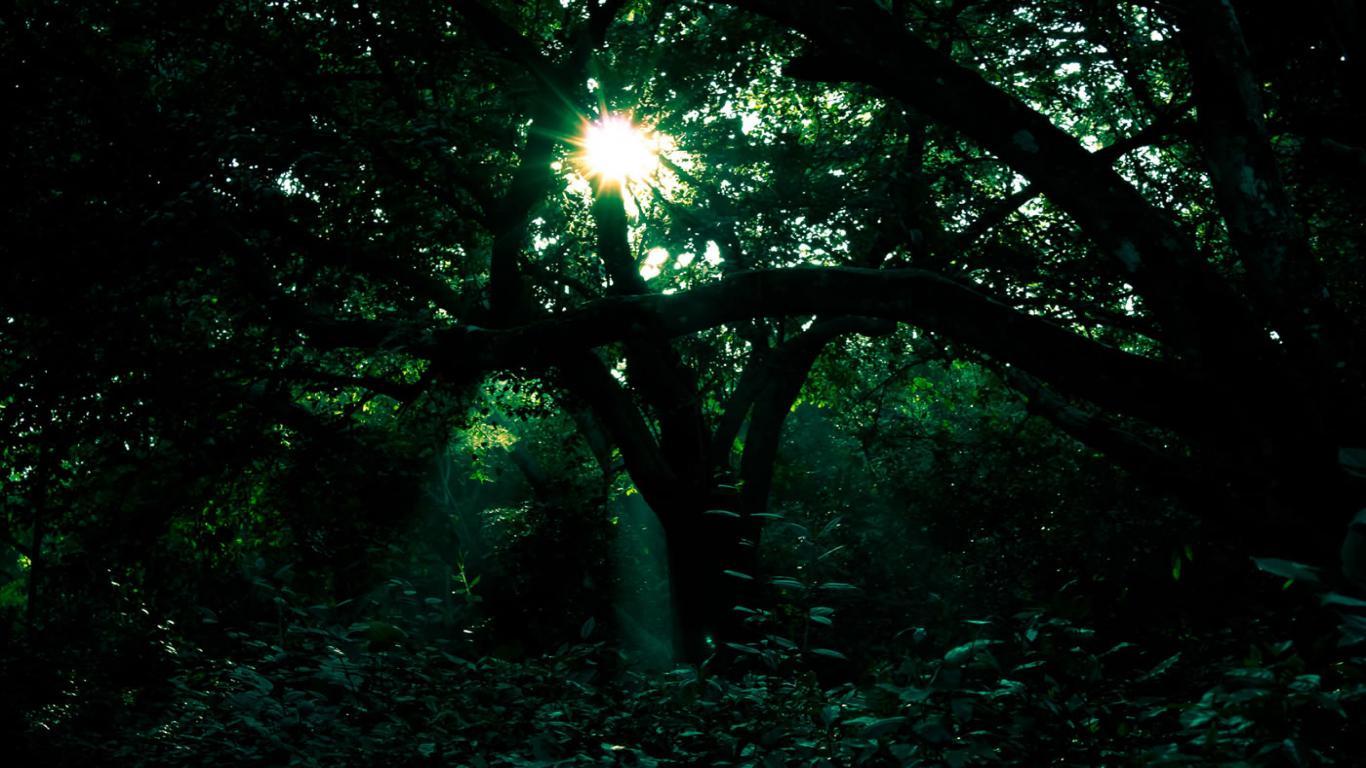 1366x768px dark forest background wallpapersafari