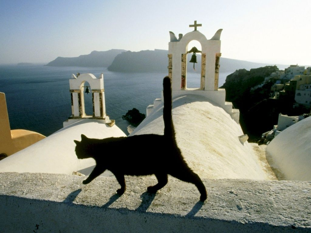 Black cat on the church roof in Greece HD Desktop Wallpaper 1024x768