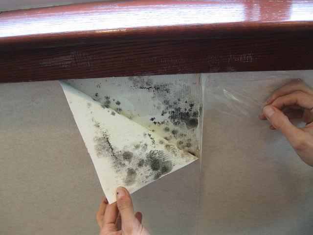 Black Mold Under Wallpaper Wallpapersafari