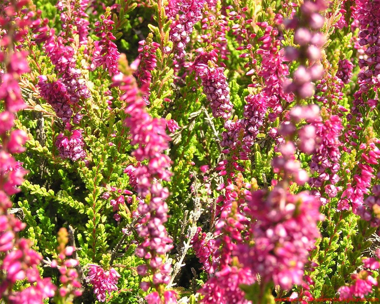 spring flowers screensavers - photo #22