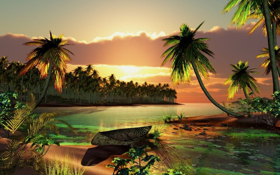 PALM TREE SUNSET Wallpaper   ForWallpapercom 969x606