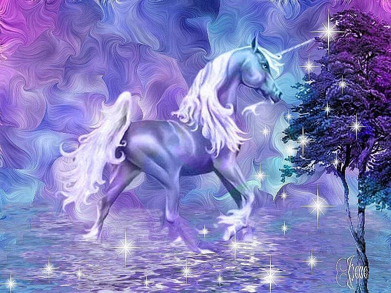 Fantasy unicorn   Unicorns Photo 13991992 800x600