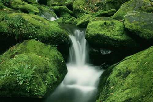 Most Beautiful Natural Wallpapers collections download 500x333