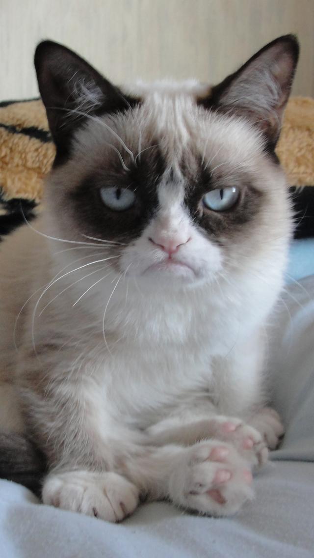 Grumpy Cat iPhone 5 Wallpaper 640x1136 640x1136