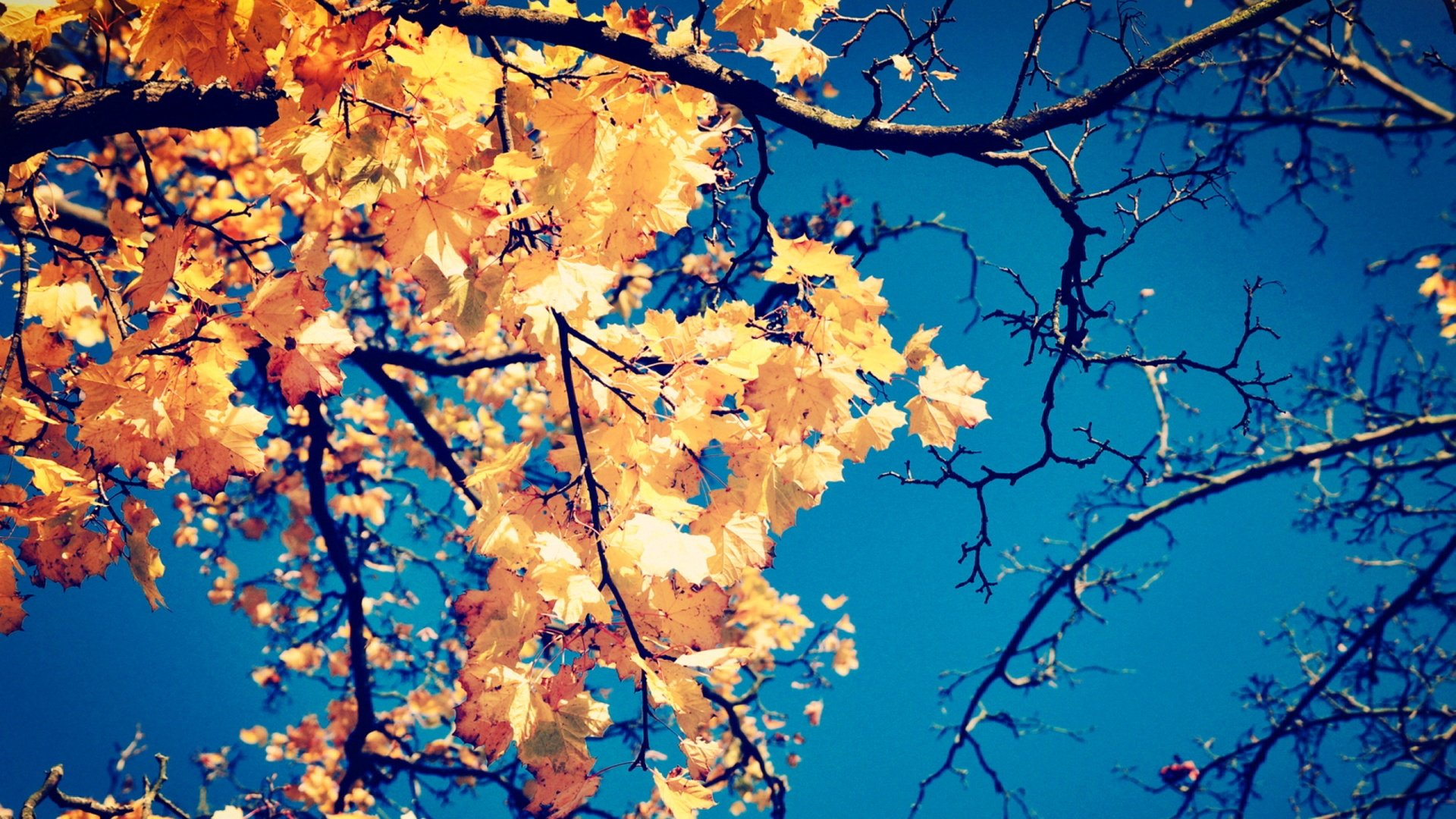autumn leaves wallpaper free download