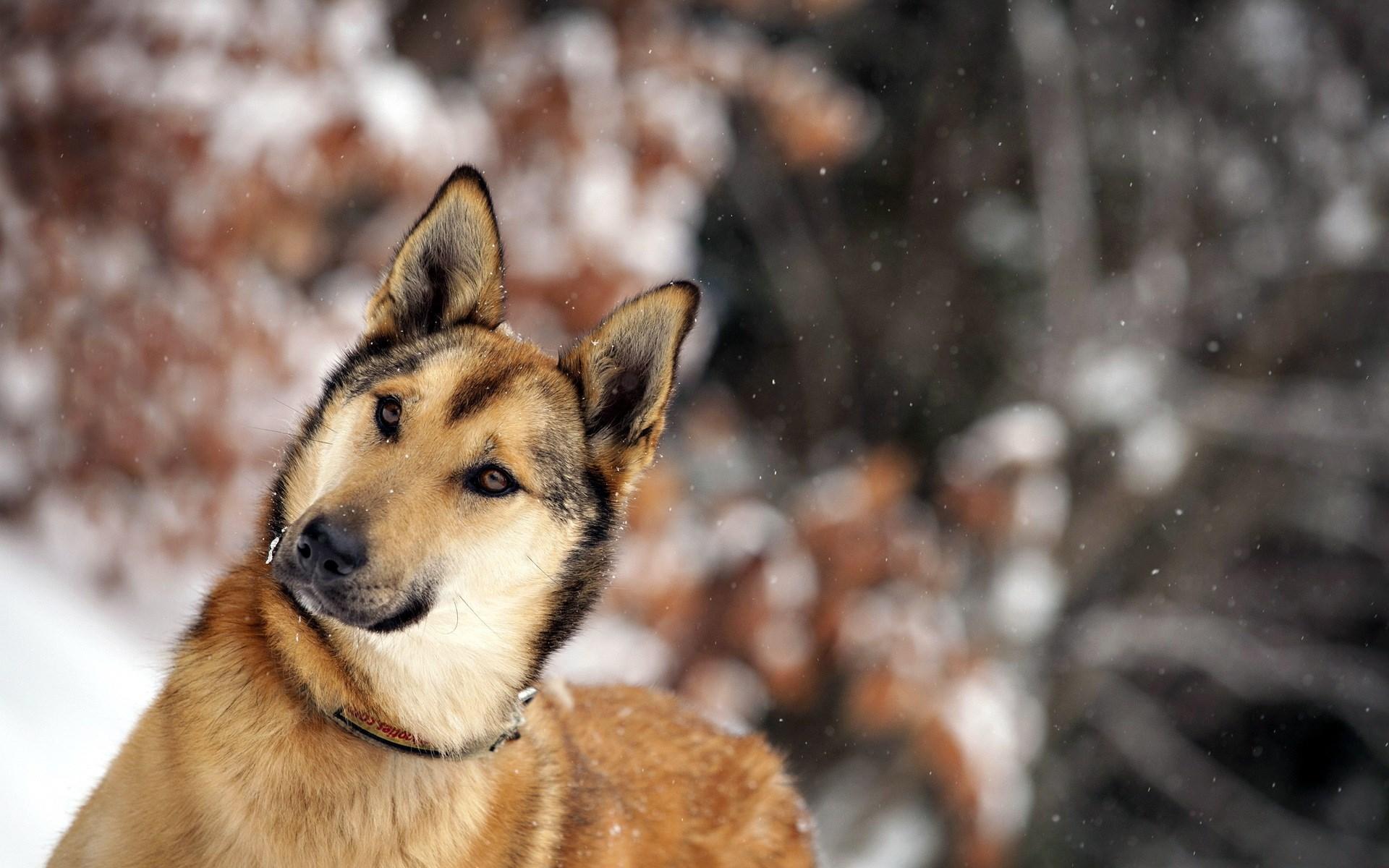 Dogs Winter 1920x1200