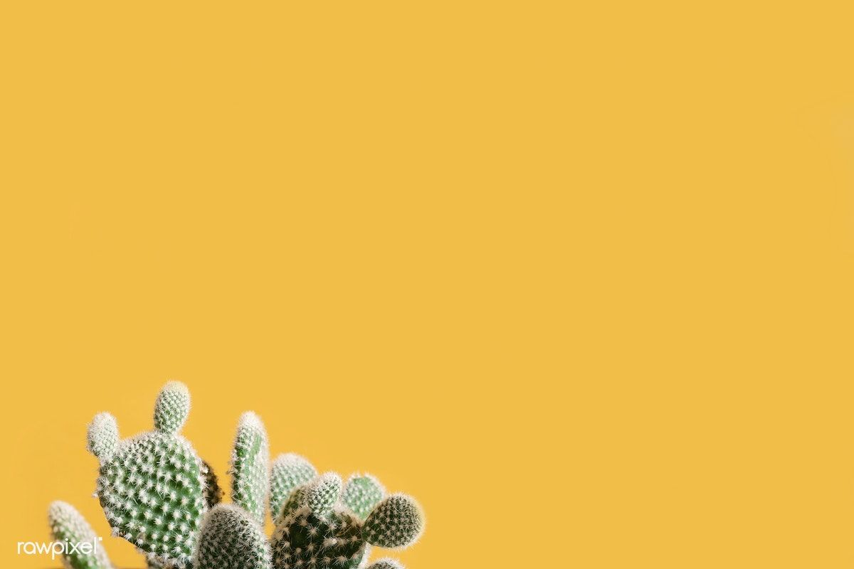 Cactus on a yellow background image by rawpixelcom Scott 1200x800