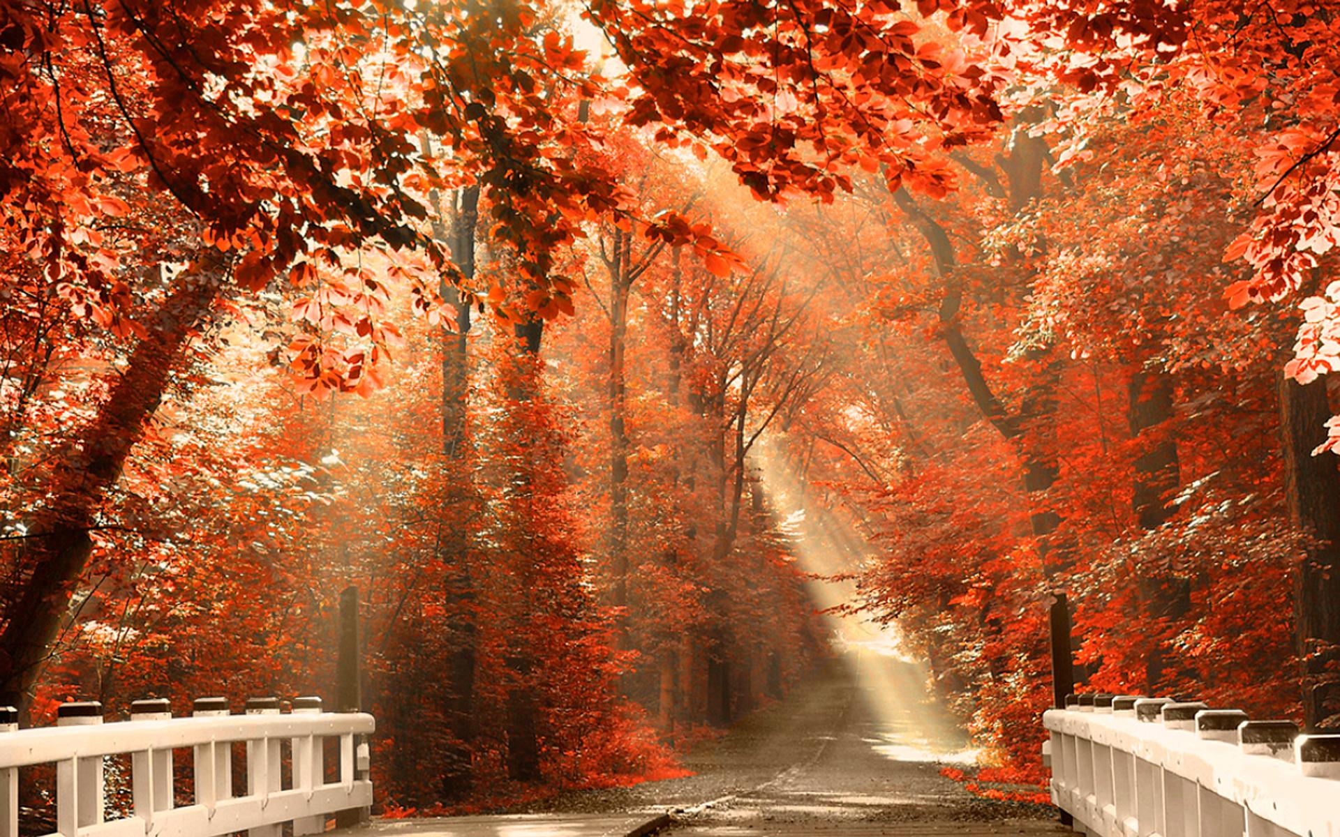 free fall autumn leaves wallpaper for desktop