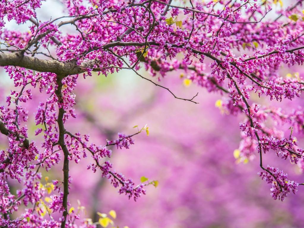 spring wallpaper hd wallpapersafari