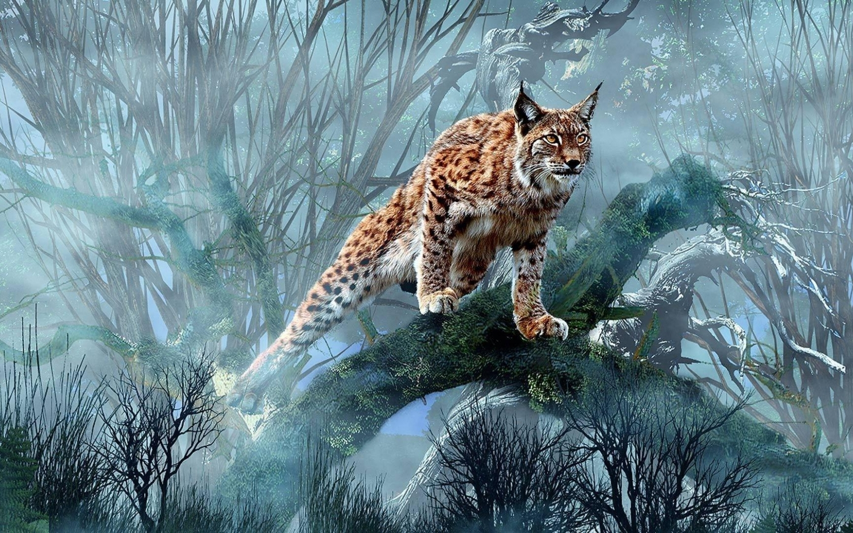 Download Lynx hunting wallpaper in Animals wallpapers with all 1680x1050