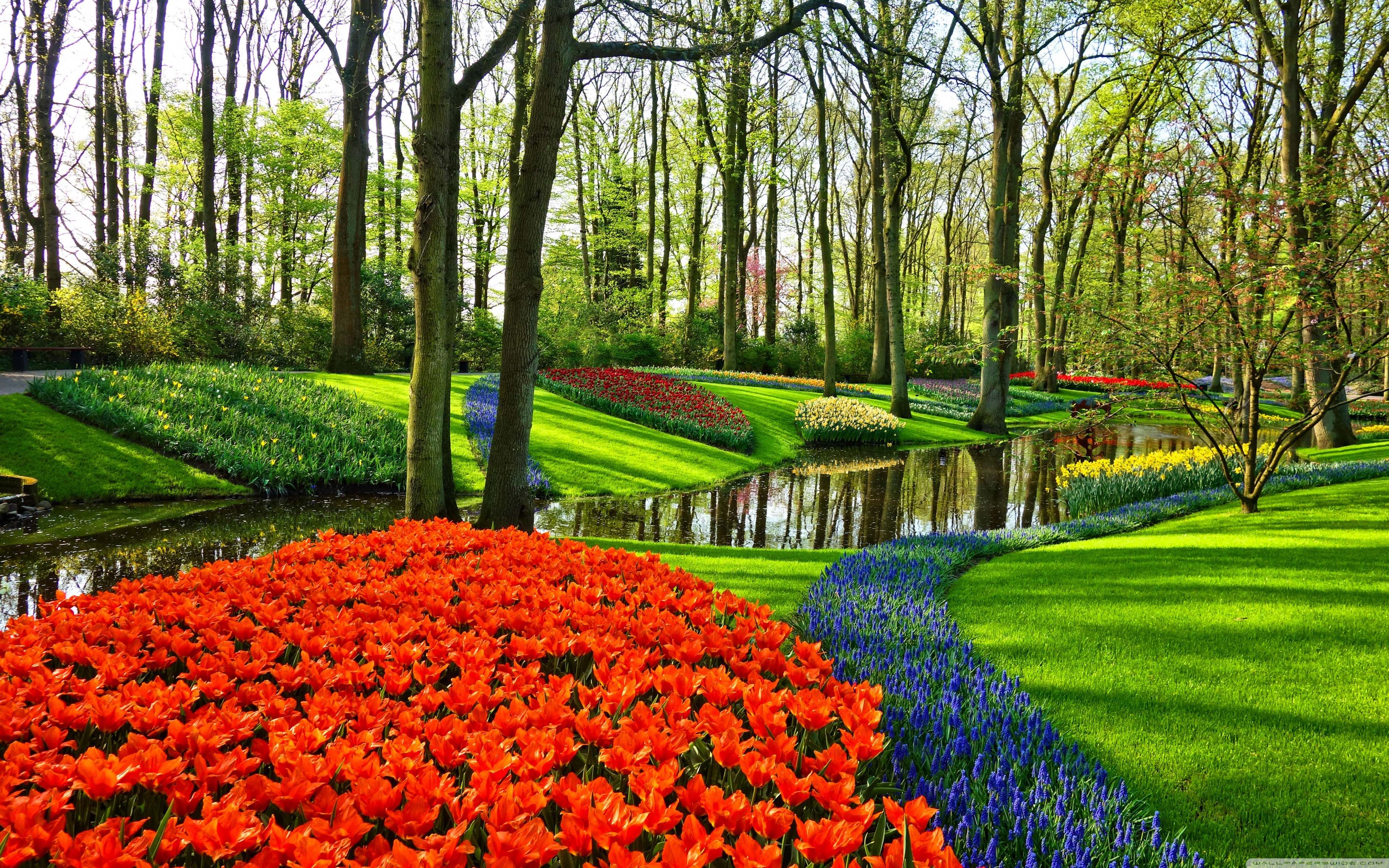 Famous Tulip Garden in Holland 4K HD Desktop Wallpaper for 4K 3840x2400