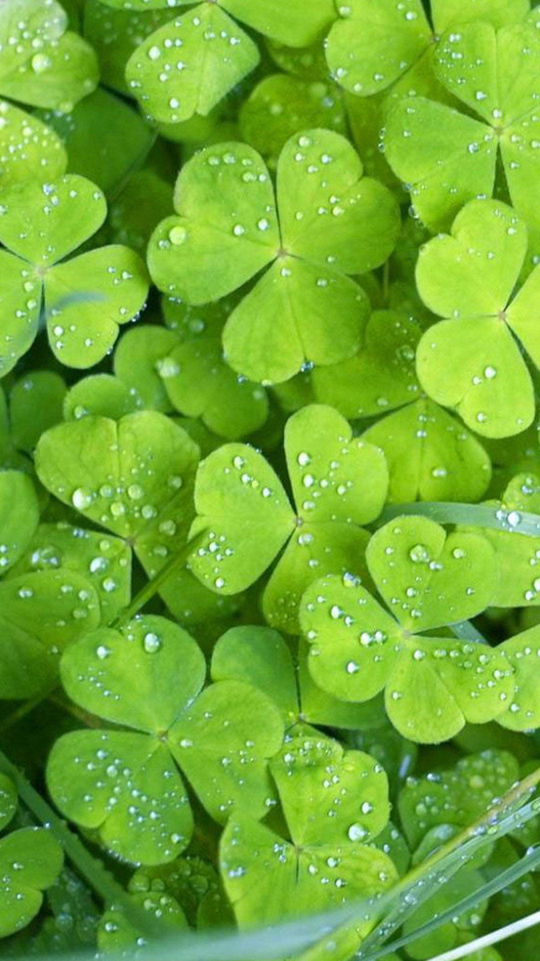 Clover Galaxy S5 Wallpapers Samsung Galaxy S5 Wallpapers 1080x1920