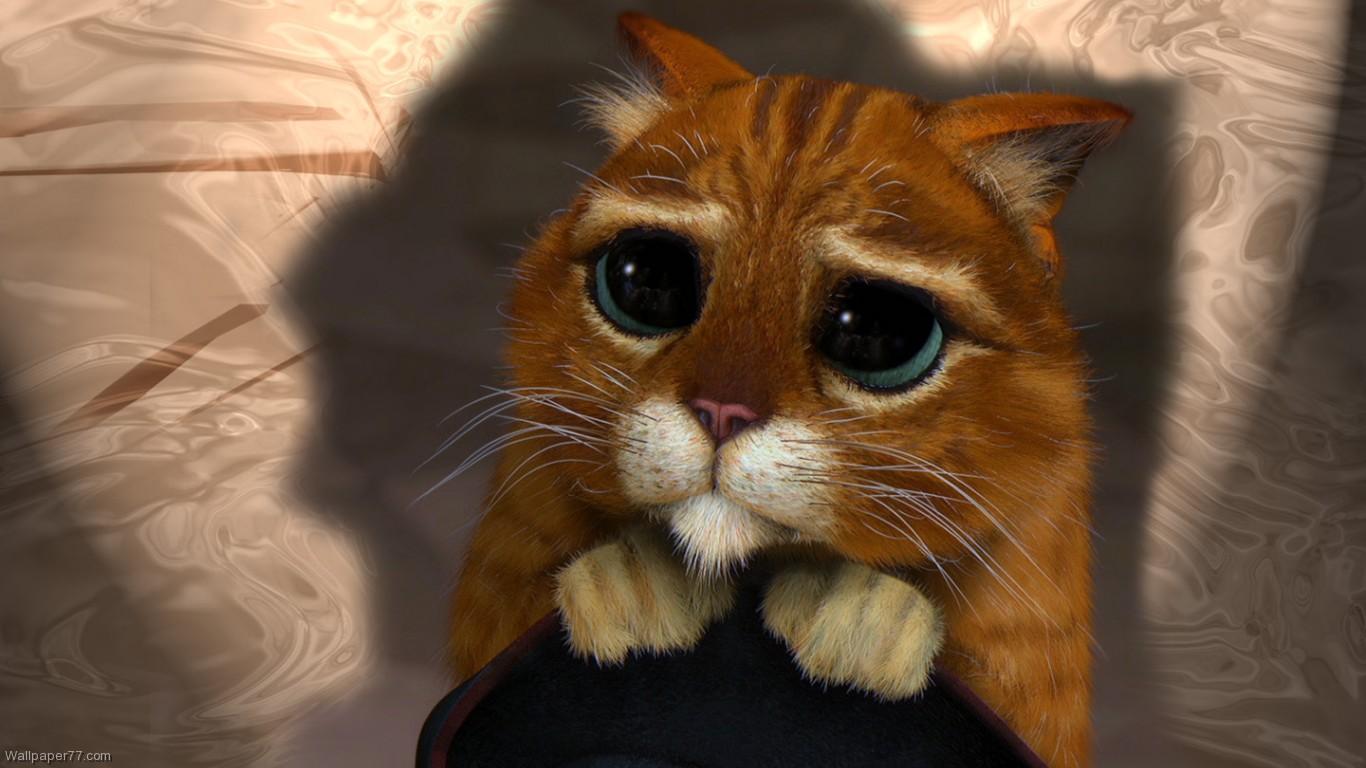 Funny Kitten Wallpaper And Screensavers Wallpapersafari
