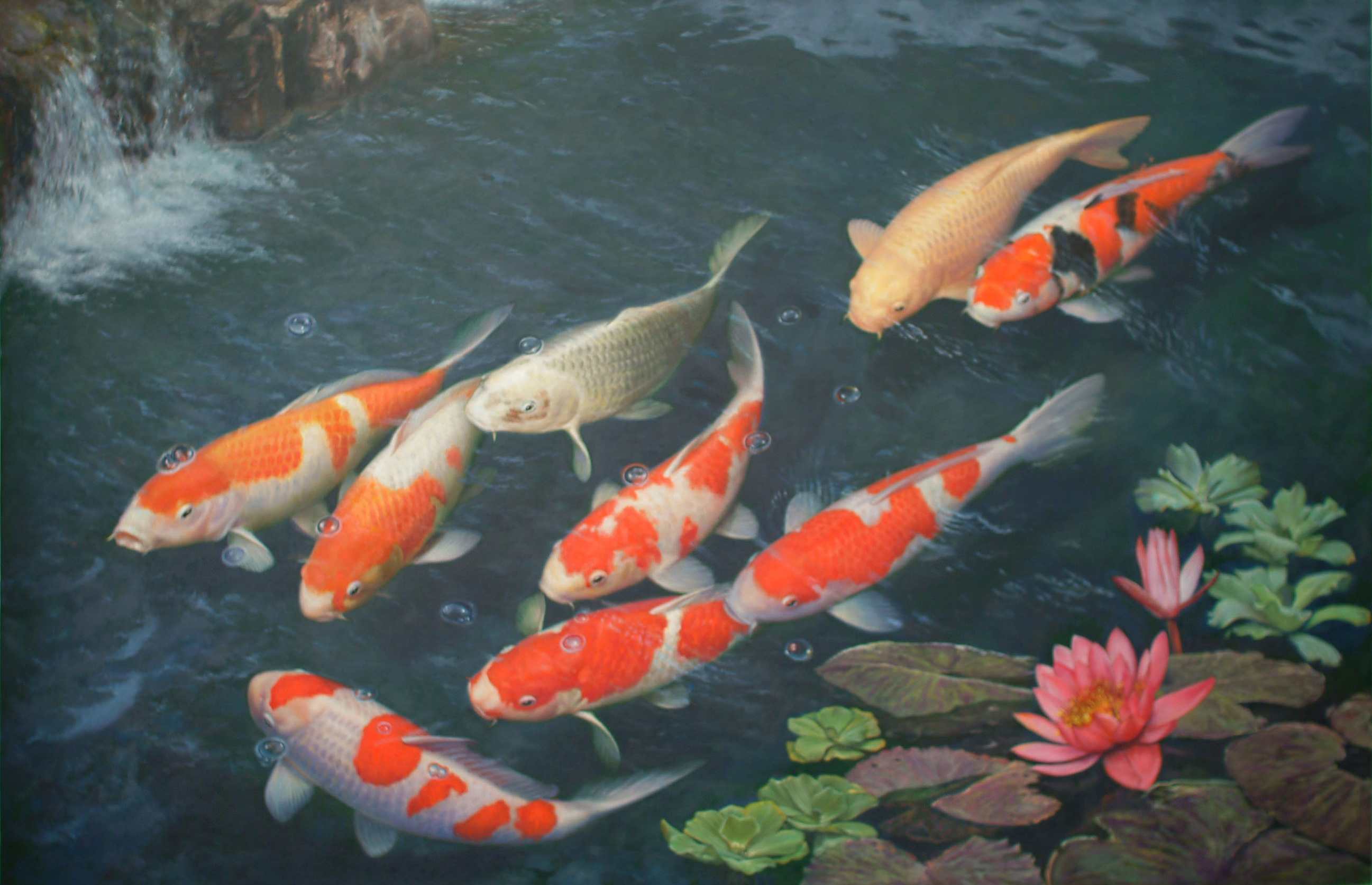 Koi fish wallpaper wallpapersafari for Koi fish wallpaper for walls