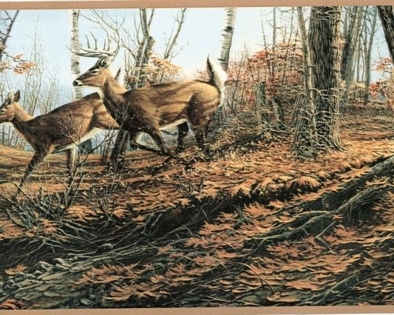 Autumn Deer Wallpaper Border Cabin Lodge Wildlife Hunting Sale eBay 576x460