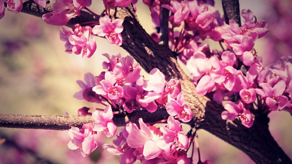 Cute Flowers 1024x576