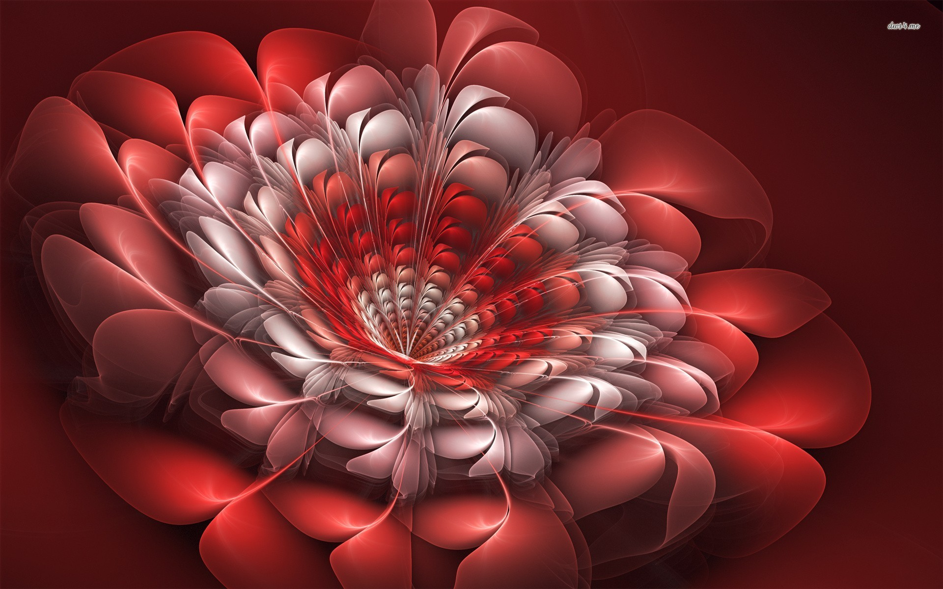 Wallpaper 3d Flower   Wallpapers And Pictures 1920x1200