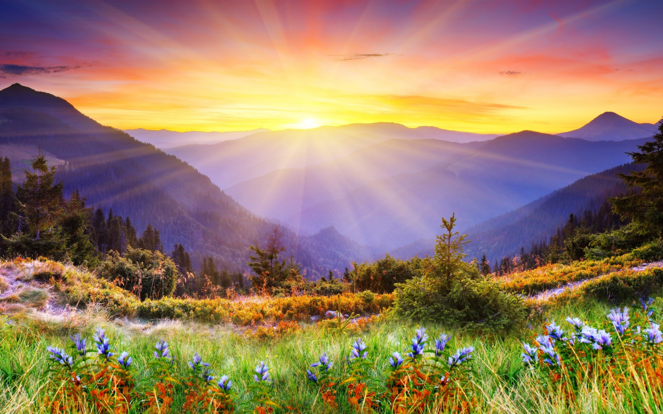 Magical Landscape 4K Ultra HD wallpaper 4k WallpaperNet 2560x1600
