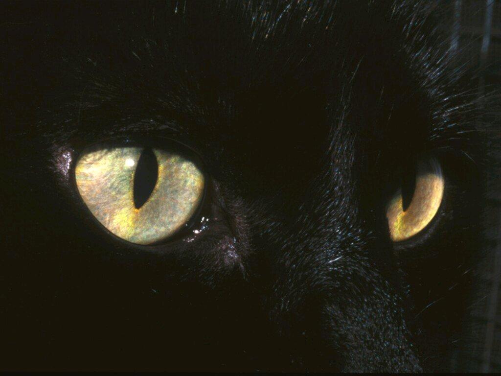 Black Cat Screensavers and Wallpaper - WallpaperSafari