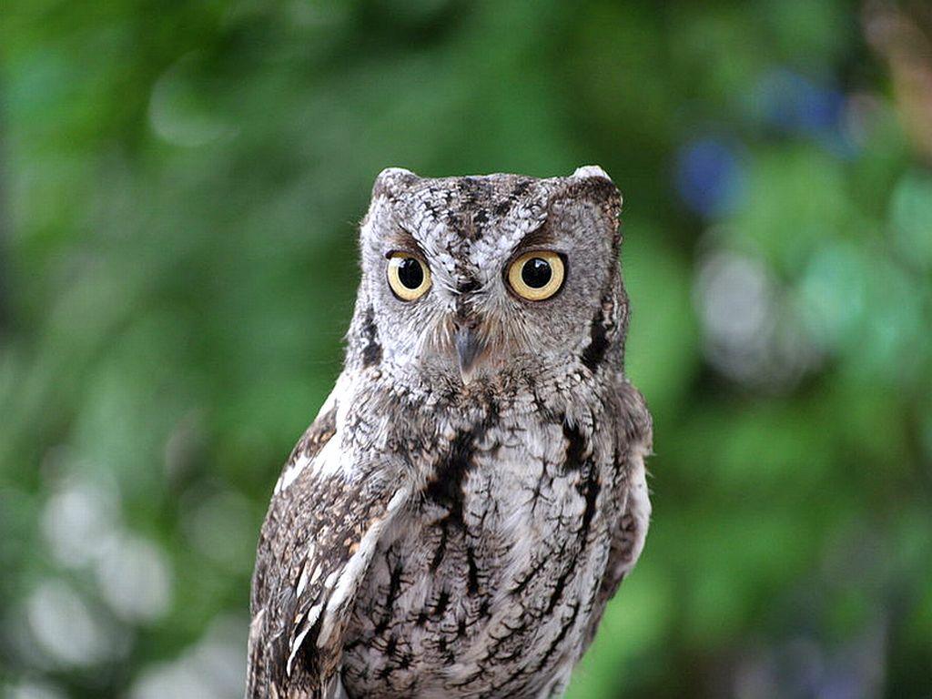 Cute Owl Wallpapers - WallpaperSafari