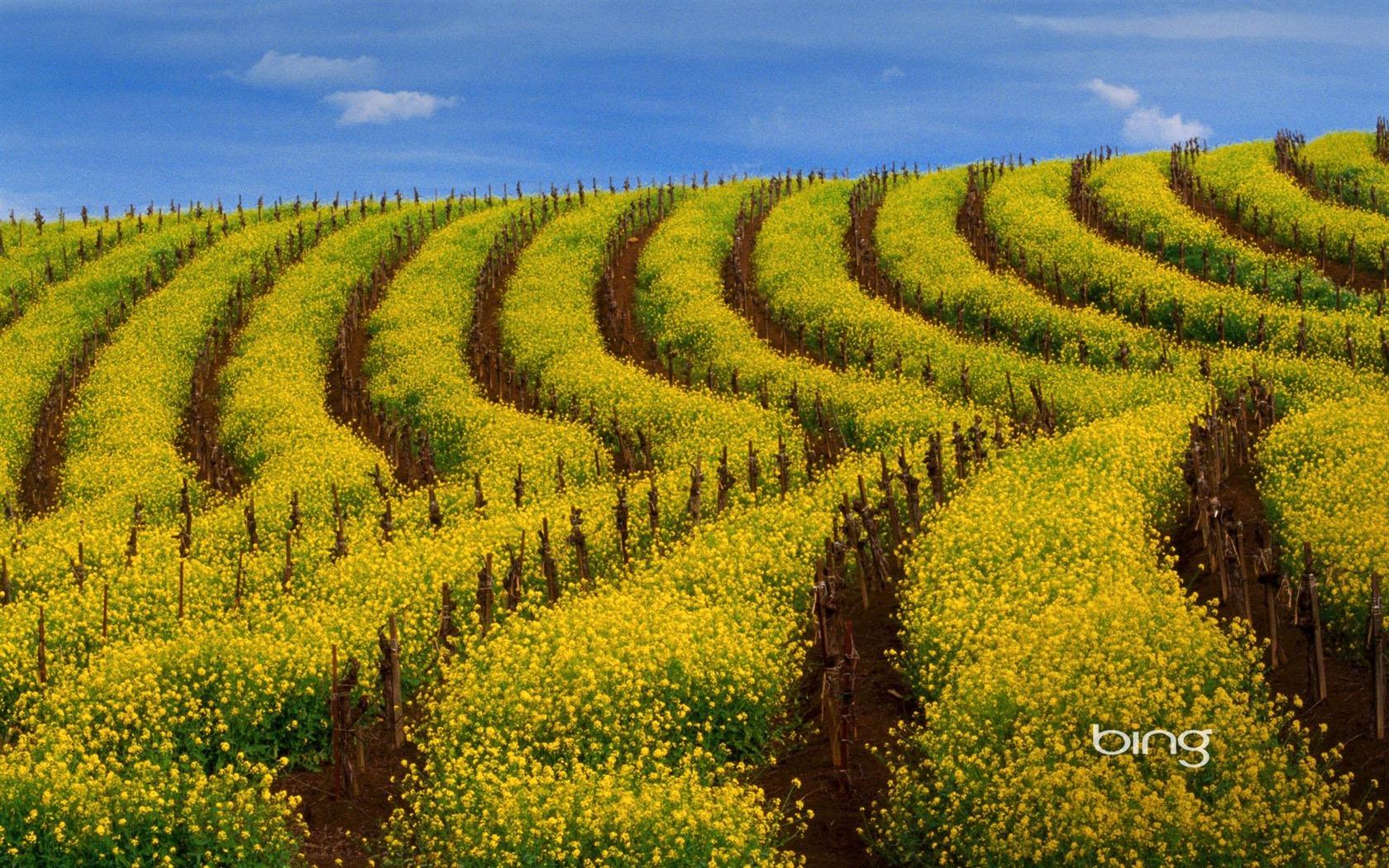 Bing Thmes terrain de viol Widescreen Wallpaper HD   1680x1050 1680x1050