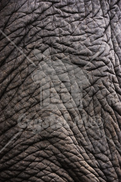 Elephant skin grunge texture background   Crystalmoo Graphic House 393x590