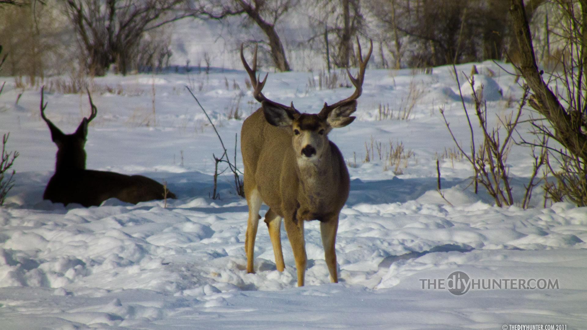 Hunting wallpapers and backgrounds wallpapersafari - Free deer hunting screensavers ...