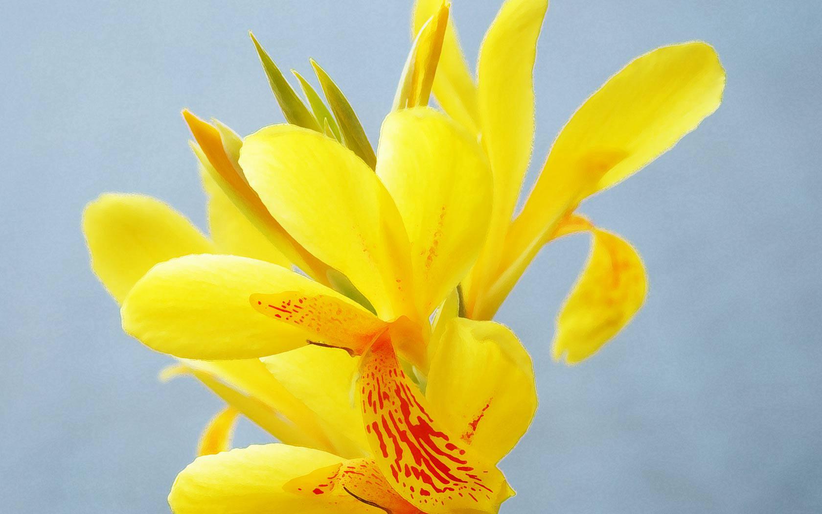 Hd wallpaper yellow flowers - Yellow Flowers Cool Wallpaper Yellow Flowers Cool Wallpaper Was Posted