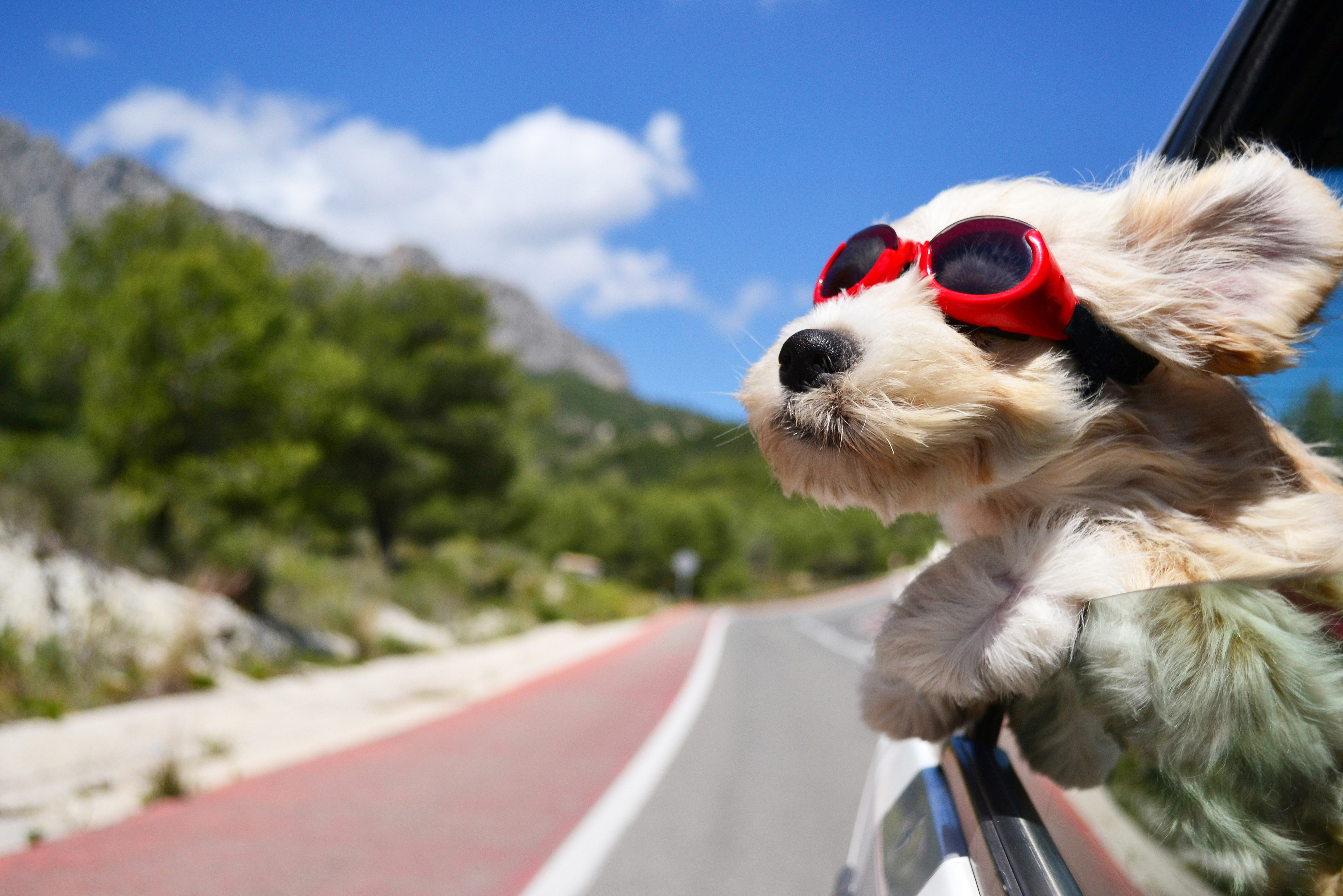 Dog Wallpaper   Yorkshire Terrier glasses fluffy wind 5120x3414 5120x3414