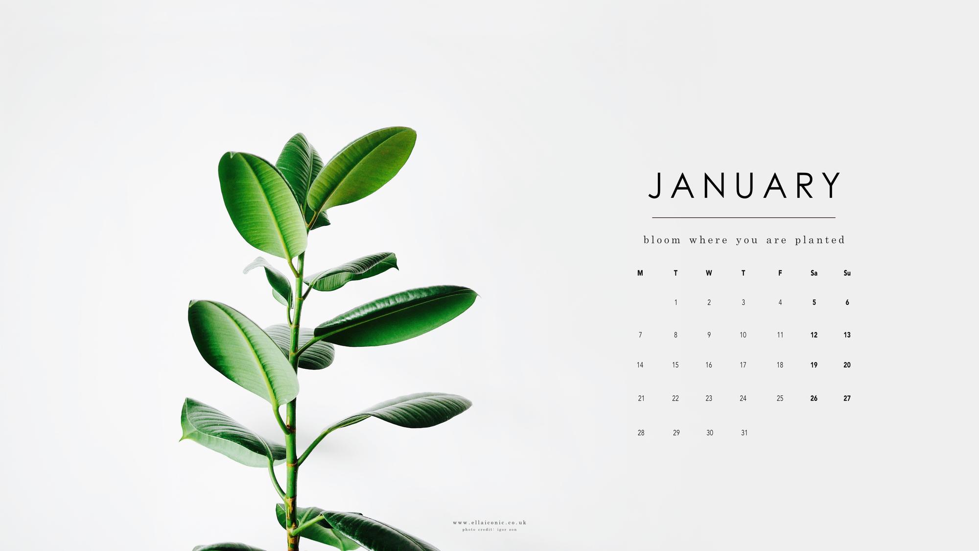 FREE January 2019 Desktop Wallpaper Ella Iconic 2000x1125