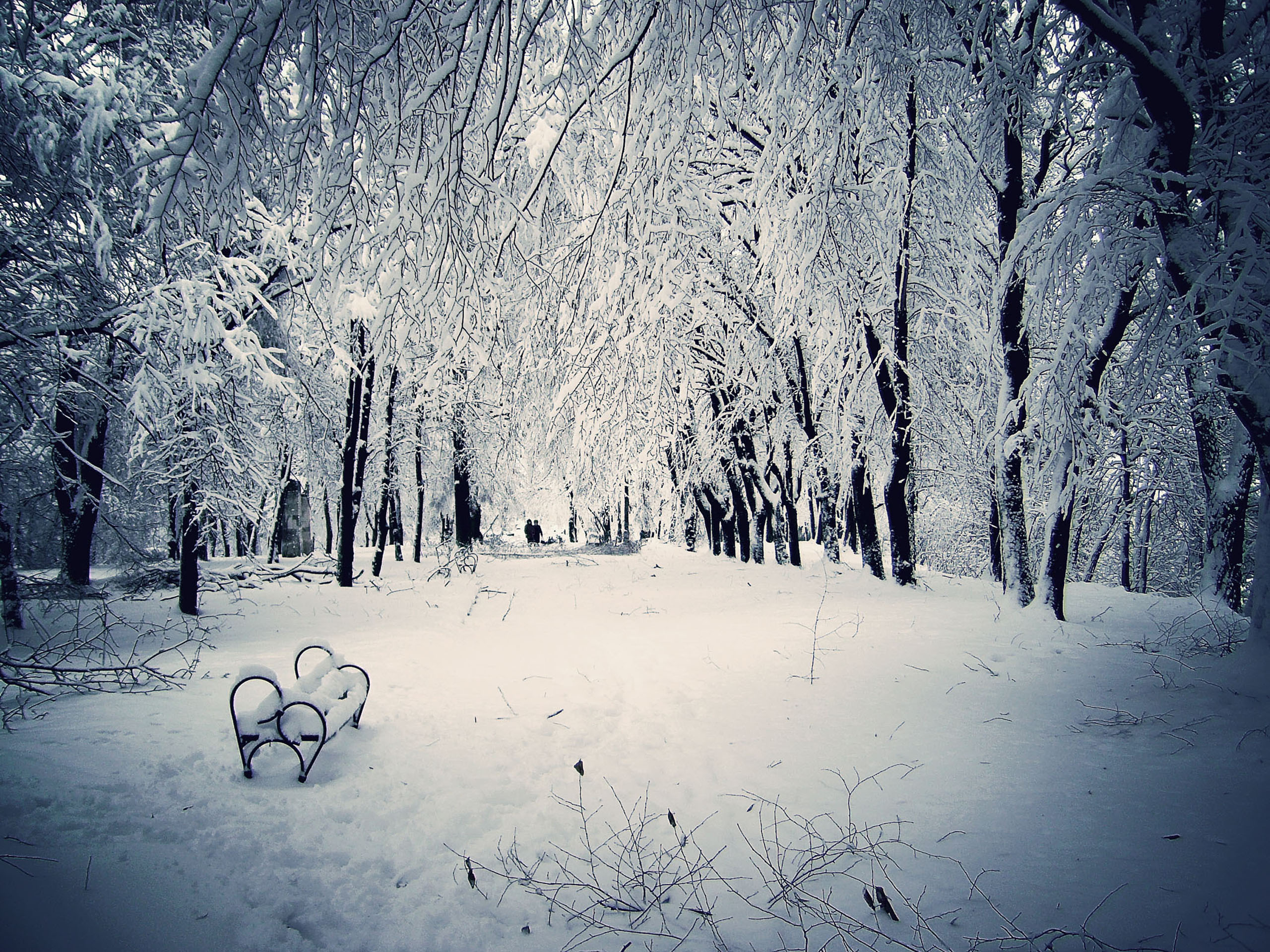 Winter Snow Scenes Vector Download 2560x1920