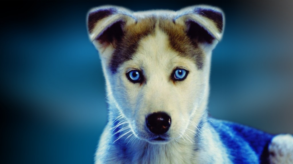 Dog Widescreen Wallpaper For Laptops Wallpapers 1024x575