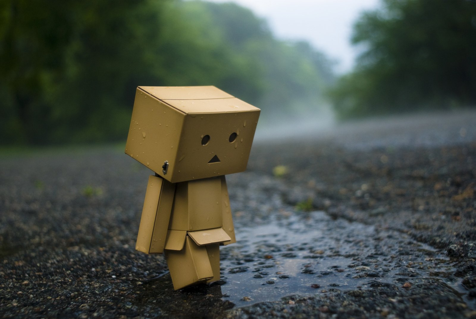 99 Danbo HD Wallpapers Background Images 1600x1071