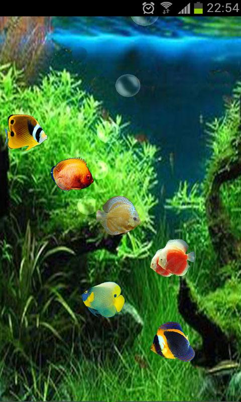 Fish swimming live wallpaper wallpapersafari for Fish live game